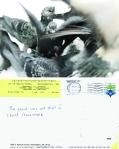 Pigeon Postcard No. 14