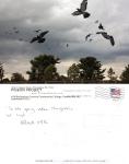 Pigeon Postcard No. 18