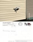 Pigeon Postcard No 17